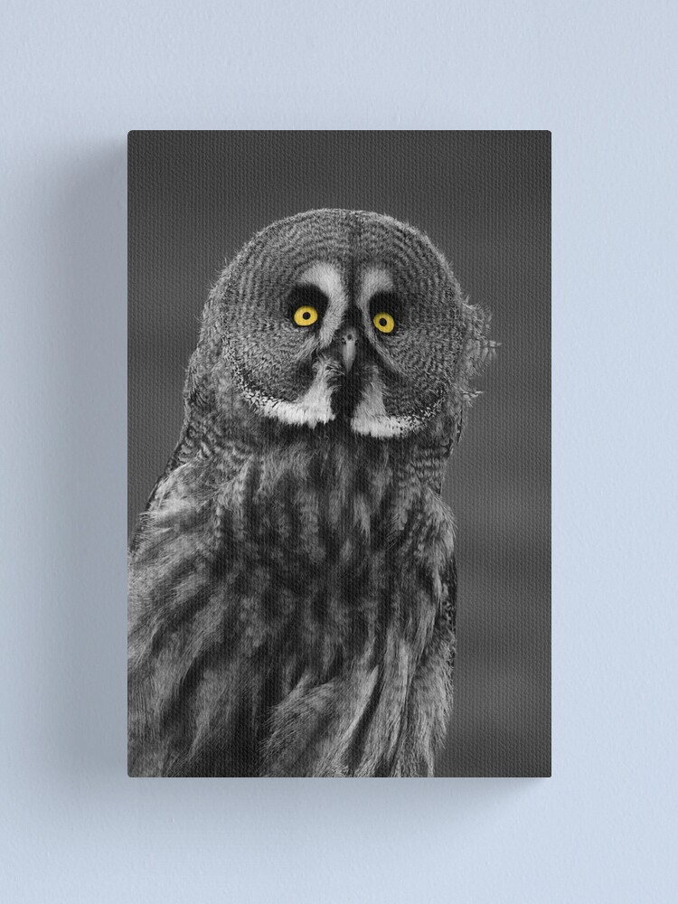 Alternate view of Great Grey Owl Canvas Print