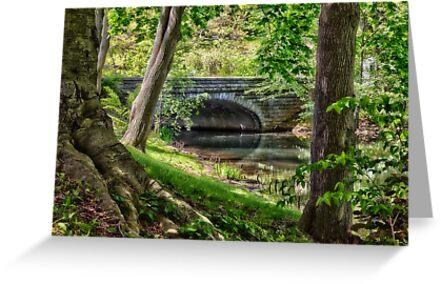 Water under the bridge.. by Yelena Rozov