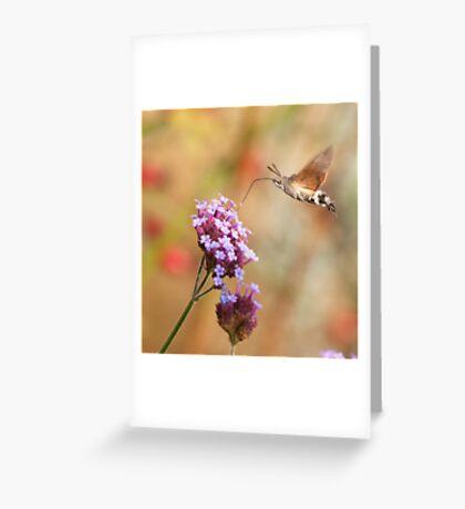 Hummingbird hawk-moth against a Flowery Background Greeting Card