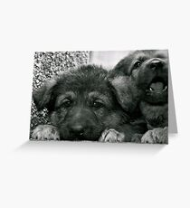Simply Cute (German Shepherd Puppies) Greeting Card