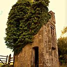 Possibly the Smallest Castle in the UK by Clive