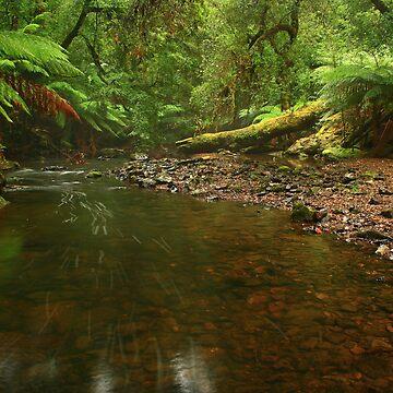 .... a creek near Garths by phillip24