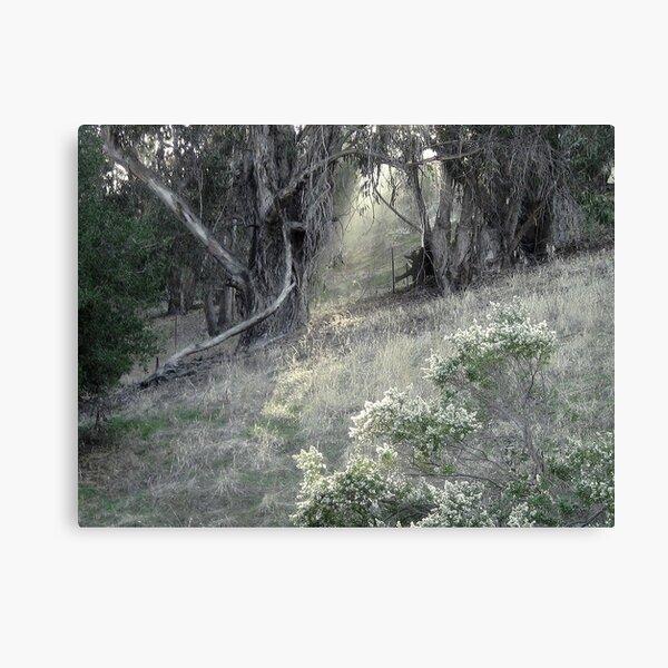 First Light Breaks Through Canvas Print