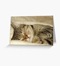 Butter wouldn't melt when he's asleep! Greeting Card