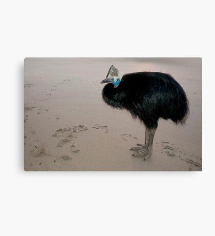 Ms Etty - cassowary on the beach Canvas Print