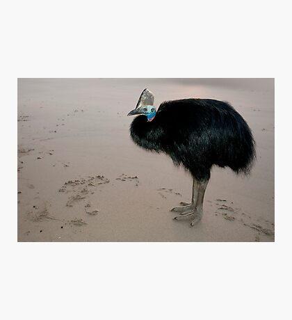 Ms Etty - cassowary on the beach Photographic Print