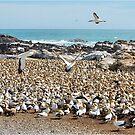 """BIRD ISLAND A """"GANNETS"""" PARADISE von Magriet Meintjes"""