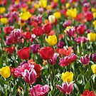 Spring Joy by Jay Armstrong