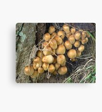 Lightly woven together Canvas Print