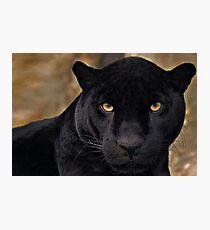 The Black Panther Fotodruck