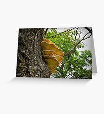 Sulphur Shelf Greeting Card
