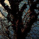 winter mosstrees by Laurkat