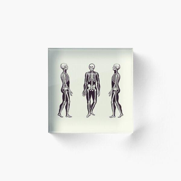 Side View Skeleton - Vintage Anatomy Print 2 Acrylic Block