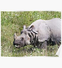 Greater One-horned Asian Rhinoceros Poster