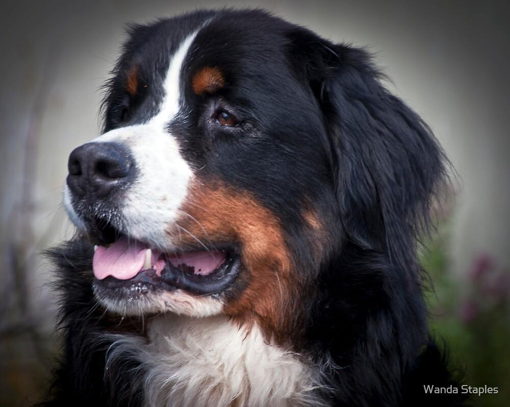 Bernie the Dog by Wanda Staples