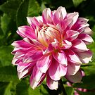 Delightful Dahlia. by Lee d'Entremont