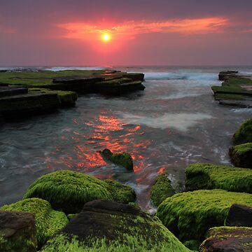 Weedy Sunrise Turimetta by Mattpenfold