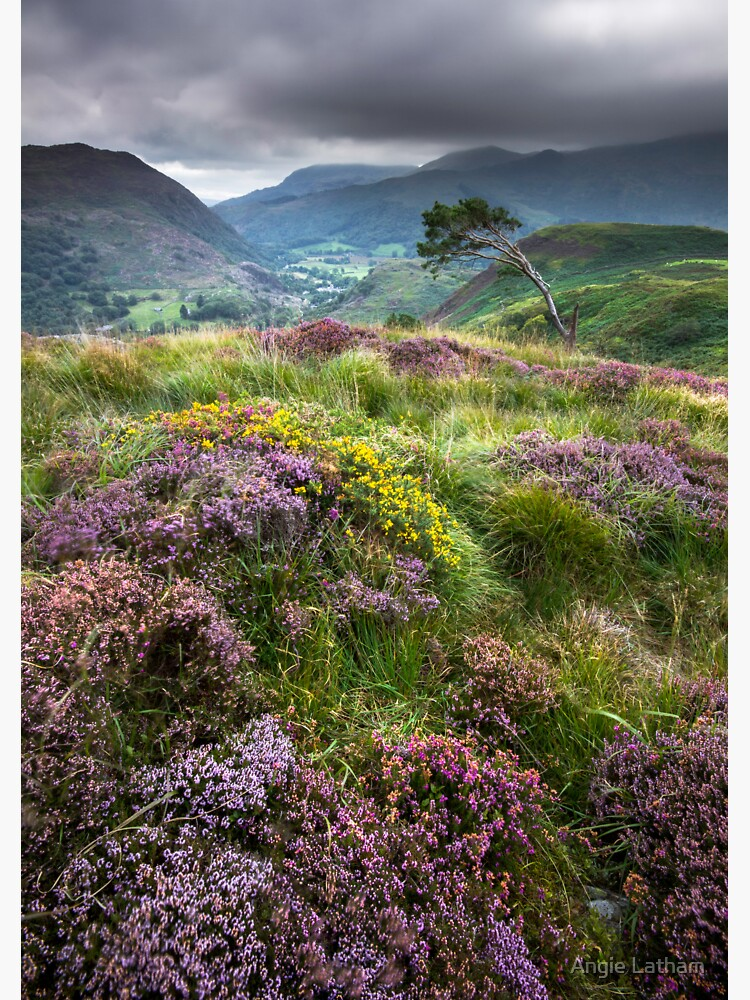Snowdonia - Heather & Gorse above Beddgelert by AngelaBarnett