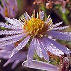 Dew On Wildflowers by teresa731