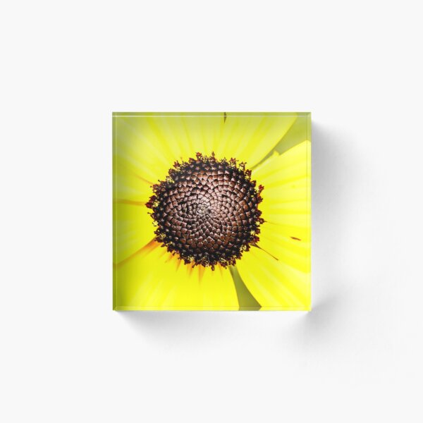 Black Eyed Susan Flower Acrylic Block