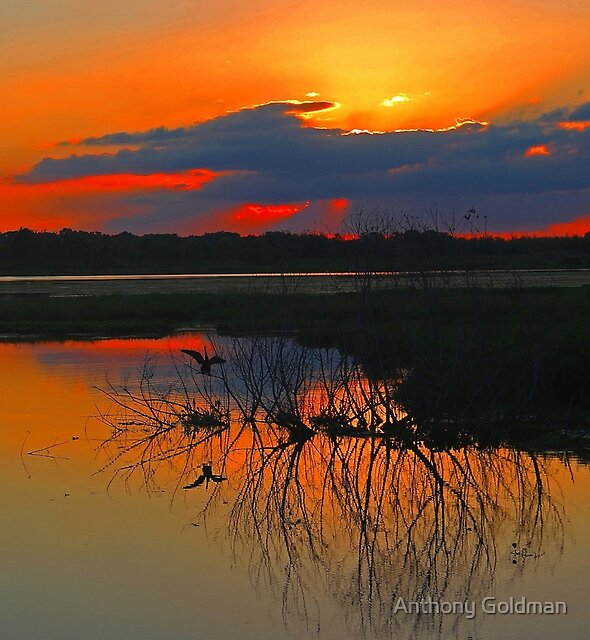 Florida Magical Sunset! by Anthony Goldman