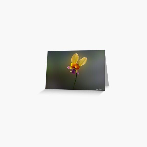 Purple Pansy Orchid, Diuris longifolia Greeting Card