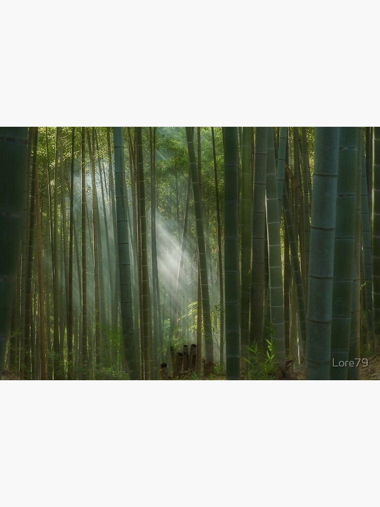 The mystic bamboo forest of Kyoto, Japan by Lore79