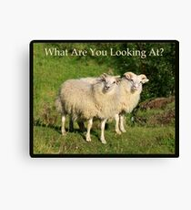 Nature Series/Humor/What Are You Looking At? Canvas Print