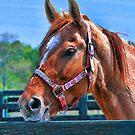 Equine Rescue of Aiken by Randall Faulkner