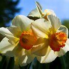 Daffodils In Spring by Randall Faulkner