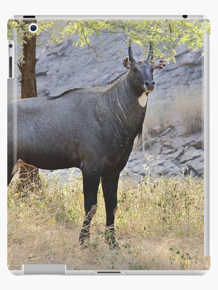 NILGAI BLUE BULL ANTELOPE PORTRAIT ANIMAL PAINTING PET ART REAL CANVAS PRINT