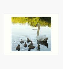 My beloved swans! Art Print