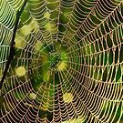 Early Morning Web  by Don Rankin