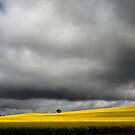 Storm Clouds over Canola Fields SA by Gerijuliaj