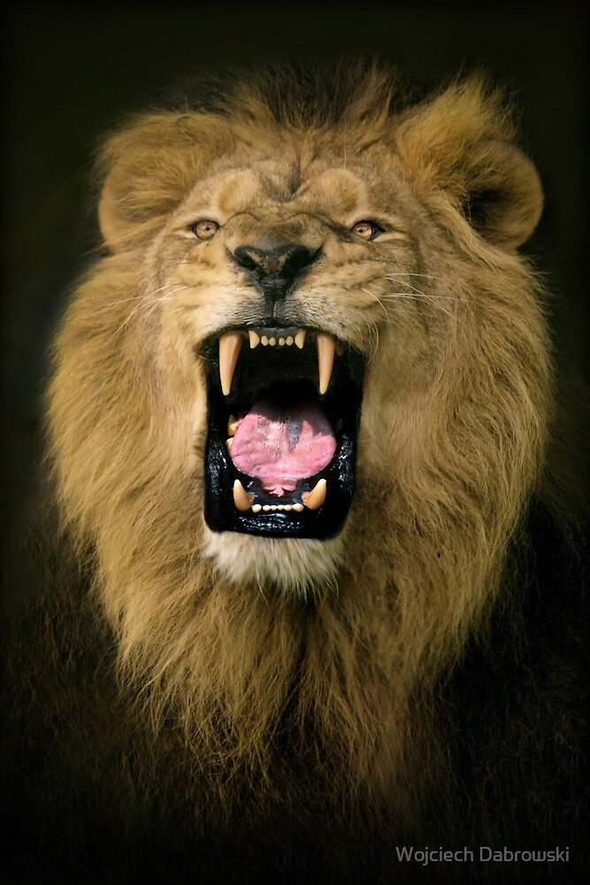 King of the jungle by Wojciech Dabrowski