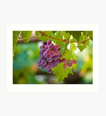 Red Grape Art Print