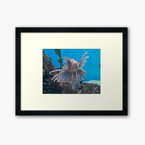 Fish in a Tank Framed Art Print