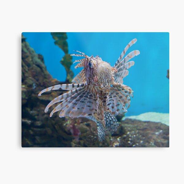 Fish in a Tank Metal Print