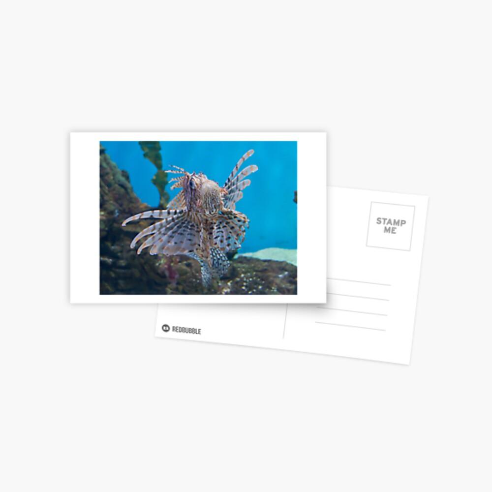 Fish in a Tank Postcard
