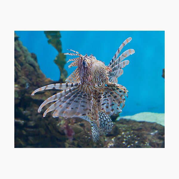 Fish in a Tank Photographic Print