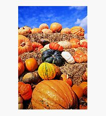 Colorful pumpkins  Photographic Print