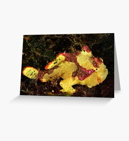 Clown Frogfish Greeting Card