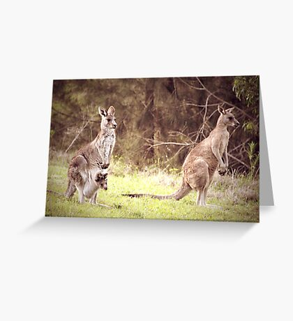 The Kangaroo Family Greeting Card