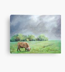 Big hairy cow (what storm??) Canvas Print