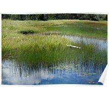 Grassy Pond Poster