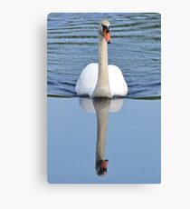 Swan Reflections Canvas Print