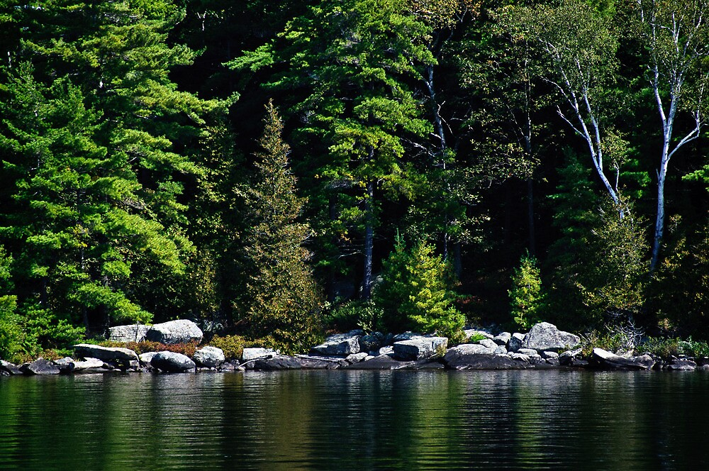 Along The Water's Edge - Shades of Green Series by jules572