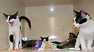 Meet The Kittens by jodi payne