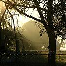 Morning Mist by Tammy Serdiuk
