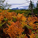 Bracken Ferns by Charles & Patricia   Harkins ~ Picture Oregon